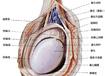 睾丸炎的检查和治疗